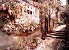 roses are better outside