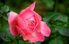 Rose im Oktober - Jahreszeiten - Galerie - Community