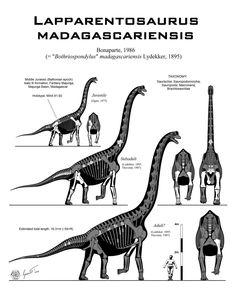 """Lapparentosaurus (""""lagarto de Lapparent"""") es un género representado por una única especie de dinosaurio saurópodo macronario, que vivió a mediados del período Jurásico, hace aproximadamente 167 millones de años, en el Batoniano, en lo que hoy es Madagascar.1 Lapparentosaurus fue un saurópodo de 15 metros de largo, 6 de alto y un peso de 25 toneladas."""
