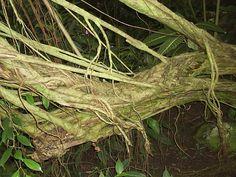 Palmengarten Ffm