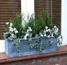 Gardening Autumn - Winter window box - With the arrival of rains and falling temperatures autumn is a perfect opportunity to make new plantations Winter Window Boxes, Window Box Plants, Window Box Flowers, Balcony Plants, Flower Boxes, Balcony Garden, Porch Plants, Shade Plants, Cool Plants