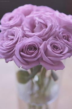My favorite rose -- purple and mint