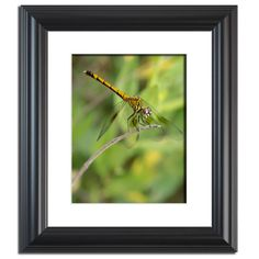 Dragonfly in Color Traditional Wildlife Photography Wall Art Prints and Limited Edition Fine Art Prints by nature and landscape photographer Melissa Fague.   Prints are available at: www.pipafineart.com.   We would love for you to follow us at: @pipafineart   #walldecor #wallhanging #homeaccessories #homedecore #wallart #photographyart #photographyartwork #photographywallart #Animalart #wildlifewallart #wildanimals #artwildlife #dragonfly #dragonflies