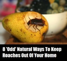 8 Odd Natural Ways To Keep Roaches Out Of Your Home ~ icky pic, but tells ways that work,and ways that don't!