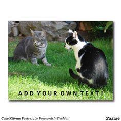Cute Kittens Portrait Postcard