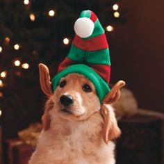 Kyjen Holiday Reindeer Antlers for Dogs Large Dog Christmas Pictures, Christmas Puppy, Christmas Animals, Merry Christmas, Cute Puppies, Cute Dogs, Corgi Puppies, Holiday Hats, Reindeer Antlers