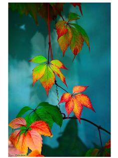 ¿Quién pinta, quién pinta las hojas y flores de tan bellos colores?
