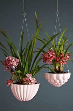 Ceramic Hanging Jelly Planters by Angus & Celeste