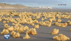 They've been described as looking like strange sponges, yellow mousse and large balls of earwax.