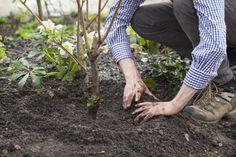 """Gartenglück: """"Blühende Beete"""" von Nick Bailey"""