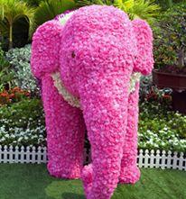 Pink Elephant Sale