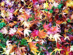Am 23. September 2014 ist #Herbstanfang. Erfahrt alles über die Entstehung und den Unterschied von meteorologischen und kalendarischen #Jahreszeiten!