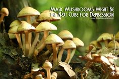Magic mushrooms turn out to be a more effective cure for depression than conventional antidepressants, recent studies show.