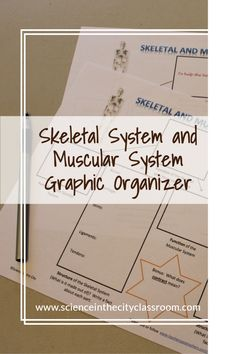 This is a FREE, READY TO USE graphic organizer that could be used with reading or textbook for student notes, or completed together. It focuses on vocabulary and key structures and functions of skeletal and muscular systems. Secondary School Science, Middle School Science, Biology Classroom, Teaching Biology, Ninth Grade, Seventh Grade, Science Resources, Science Lessons, Fun Classroom Activities