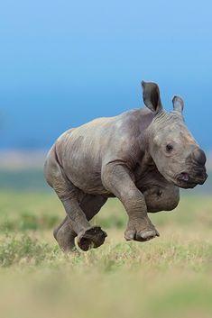 Safari Animals, Nature Animals, Cute Baby Animals, Animals And Pets, Funny Animals, Animal 2, Animal Skulls, Cute Animal Photos, Animal Pictures