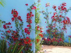 Comment habiller le mur de son jardin nos id es en for Comment cacher un mur