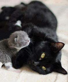 adoptive mamma......
