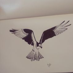 Day 22 #100daysofdoodling by Ayla Paul: Osprey (Visarend)