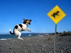 'Dog in mid air' sign with dog in mid air.