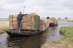 Transporting 'Riet' by boat at national park 'De Weerribben'.