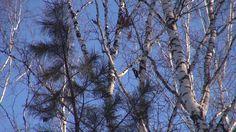 РАБОТА ДЯТЛА || Видеосюжет о враче лесного царства