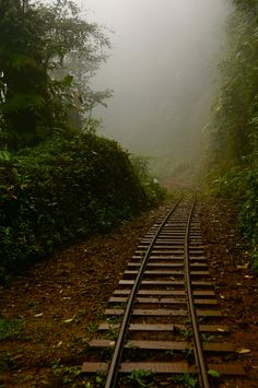 Vanishing Tracks in Costa Rica