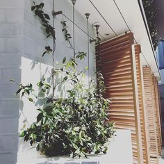 Turn your world green with a vertical wire trellis garden. ---