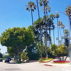 Beverly Hills ❤ Los Angeles - City of Angels www.bettyslife.com/en