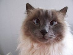 Cat Went Crazy - 33 Pictures