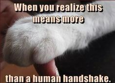 humans lie right in your face Cute Baby Animals, Funny Animals, Animals And Pets, Cat Quotes, Animal Quotes, Crazy Cat Lady, Crazy Cats, Beautiful Cats, Animals Beautiful
