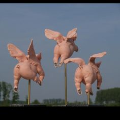 Three little winged pigs