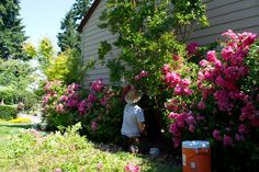 Mukilteo Landscape Project - Check out Washington Lawns crew pruning, mulching, and shaping some beautiful pink roses into a backyard paradise. Beautiful Pink Roses, Backyard Paradise, Weeding, Clean Up, Curb Appeal, Garden Landscaping, Eco Friendly, Packaging, Outdoor Structures