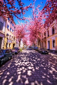 Cherry Brick Road, Bonn, Germany  Blossom reminds me of being a child, and wanting to grow up, to be a beautiful women. It reminds me of the Alexandra blossom festival, I could never forget all the smells. From the flowers, to the carnival rides and hot dog stands.