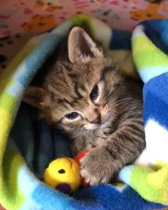 Cute Little Kittens, Cute Baby Cats, Kittens And Puppies, Cute Little Animals, Cute Cats And Kittens, I Love Cats, Crazy Cats, Kittens Cutest, Cutest Babies