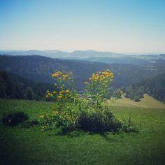 Am Braunberg Mountains, Nature, Travel, Naturaleza, Viajes, Destinations, Traveling, Trips, Nature Illustration