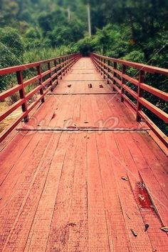 Wooden Bridge in the Forest | Photo | StockerPark