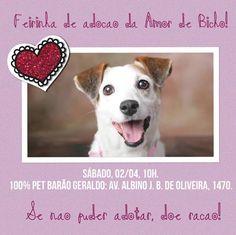 BONDE DA BARDOT: SP: Amor de Bicho realiza campanha de adoção de cães e gatos em Campinas, neste sábado (02/04)