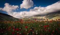 The Flowering of Castelluccio. (--Paolo Dari)