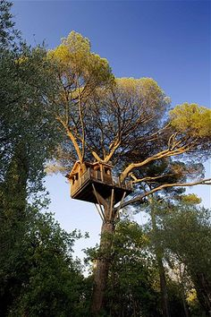 Image: Tree-house near Nice, France, that is perched on a pine tree. (© Sipa Press/Rex Features)