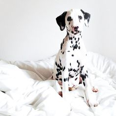 """Puppy-Dog: """"Someone told me that I'm covered in spots?! Perhaps I'm infectious? Well, my love is certainly contagious, and passed onto you!"""" (Written By: © Lynn Chateau.)"""