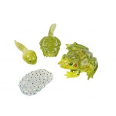 FROG Life Cycle Figurines - 4 Plastic Models of Egg, Tadpole, Froglet, Adult Kindergarten Online, Kindergarten Fun, Preschool, Life Cycle Stages, Lifecycle Of A Frog, Frog Life, Fun Arts And Crafts, Kids Crafts, Butterfly Gifts