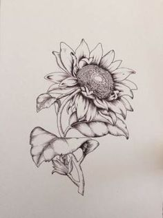 Flower Drawing Discover Items similar to Botanical Illustration - Hand Drawn Floral Sunflower Print on Etsy Sunflower botanical illustration print Print of a hand drawn illustration 148 X 210 mm / X Gesso Paper Custom drawings Sunflower Sketches, Sunflower Drawing, Sunflower Tattoos, Sunflower Print, Drawing Flowers, Sunflower Seeds, Flower Drawings, Tattoo Flowers, Sunflower Seed Image