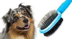 Blue Merle, American Shepherd, Australian Shepherd Puppies, Best Brushes, Working Dogs, New Puppy, Border Collie, Nail Conditions, Children
