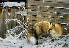 Nancy Glazier Shed Door Fox Print Internet Low Wildlife Paintings, Wildlife Art, Animal Paintings, Animal Drawings, Oil Paintings, Art Fox, Fox Drawing, Duck Art, Animal Magic