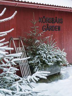 sled & planter box w/ evergreens