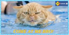 Come at me, bro - @srsportaquatics #swimming #waterpolo #water #polo #cat #pool #srsport #comeatmebro http://www.srsport.com