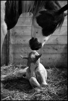 what a beautiful picture of a Mare and foal.. i love seeing baby animals with their mothers...