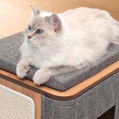 The Vesper Cubo is a lounging cube for cats. This piece of modern cat furniture is simply perfect for relaxing, sleeping, and hiding. Modern Cat Furniture, Furniture Design, Son Chat, Cat Scratcher, Cat Supplies, Kitty, Stone, Pets, Cat Trees