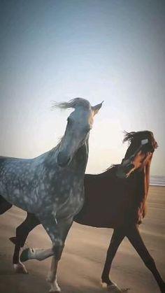 100 Books To Read, Mundo Animal, Horse Photos, Nature Animals, Wild Horses, Horse Riding, Beautiful Horses, Ayurveda, Freedom