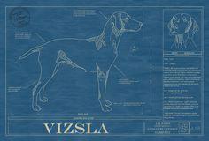 VIZSLA 1024.jpg